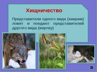 Представители одного вида (хищник) ловят и поедают представителей другого вид