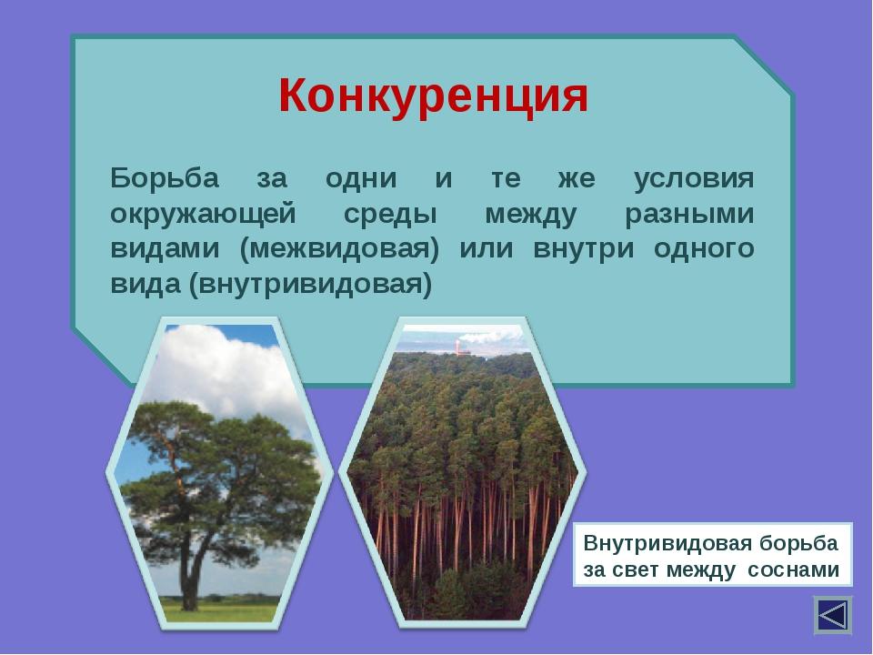 Борьба за одни и те же условия окружающей среды между разными видами (межвид...