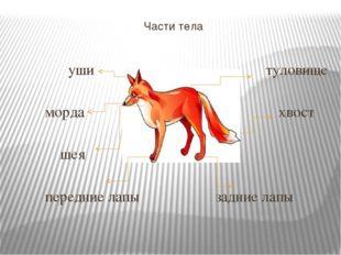 Части тела уши туловище морда хвост шея передние лапы задние лапы