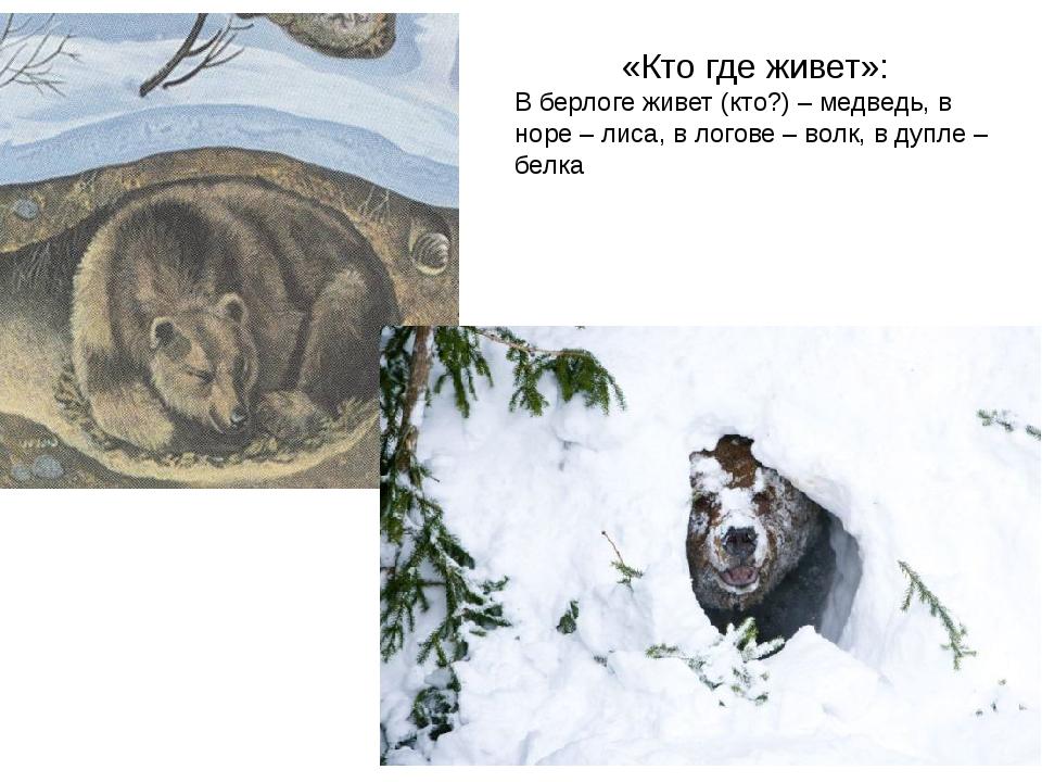 «Кто где живет»: В берлоге живет (кто?) – медведь, в норе – лиса, в логове –...