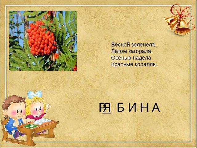 Р Б И Н А Весной зеленела, Летом загорала, Осенью надела Красные кораллы. Я
