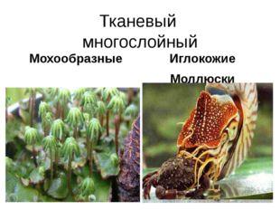 Тканевый многослойный Мохообразные Иглокожие Моллюски Отдел Мохообразные Прео