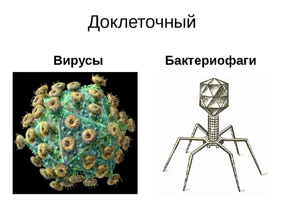 Доклеточный Вирусы Бактериофаги В настоящее время известно около 200 форм жив...