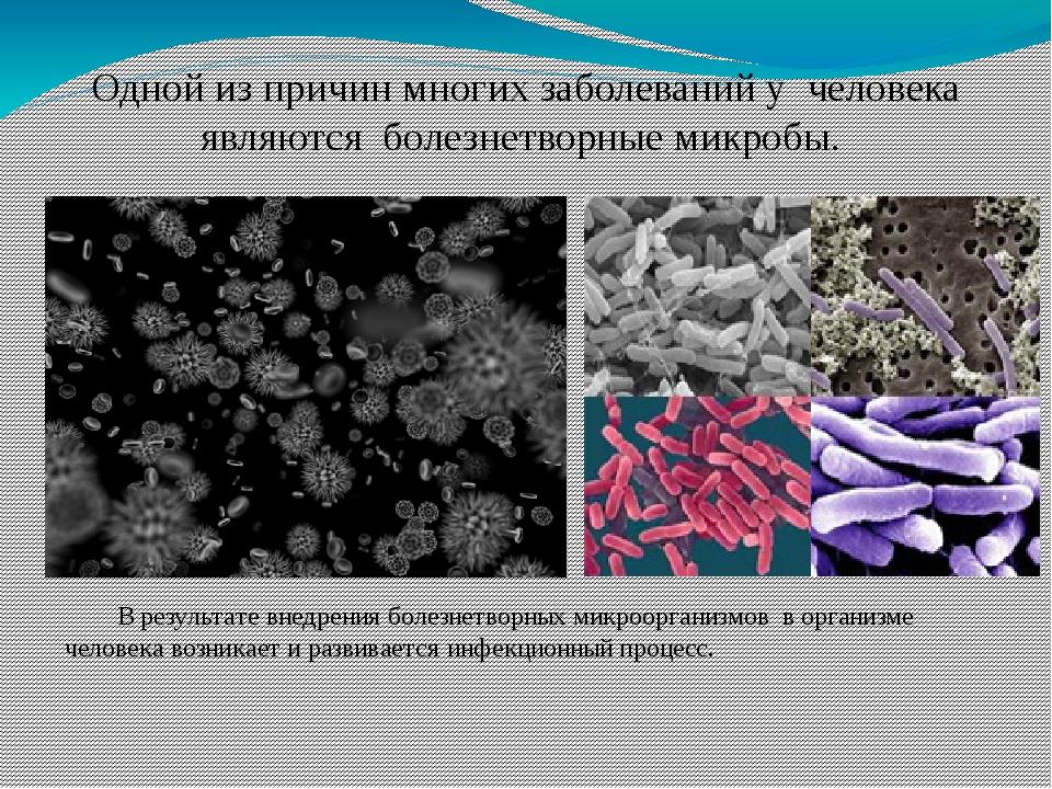 Одной из причин многих заболеваний у человека являются болезнетворные микробы...