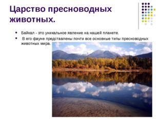 Царство пресноводных животных. Байкал - это уникальное явление на нашей плане