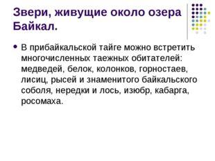 Звери, живущие около озера Байкал. В прибайкальской тайге можно встретить мно