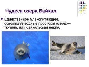 Чудеса озера Байкал. Единственное млекопитающее, освоившее водные просторы оз
