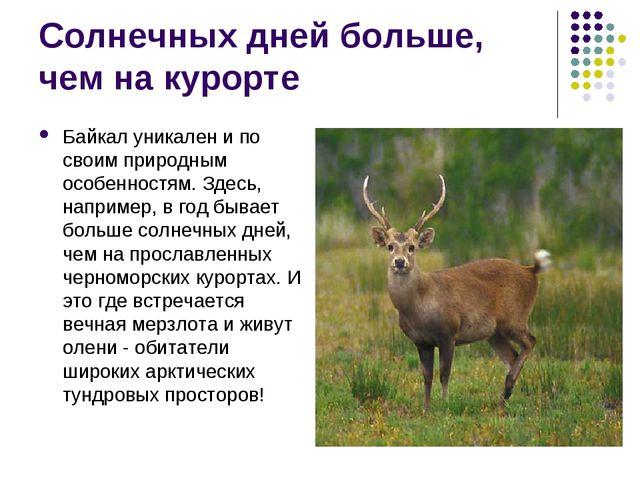 Солнечных дней больше, чем на курорте Байкал уникален и по своим природным ос...