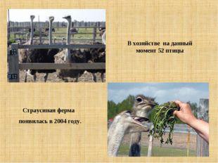 Страусиная ферма появилась в 2004 году. В хозяйстве на данный момент 52 птицы