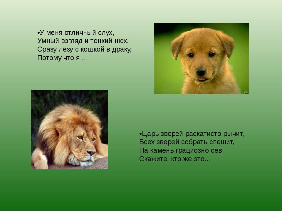 •У меня отличный слух, Умный взгляд и тонкий нюх. Сразу лезу с кошкой в драку...