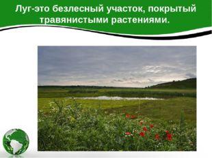 Луг-это безлесный участок, покрытый травянистыми растениями.