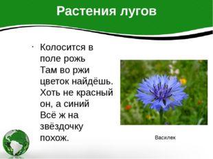 Растения лугов Колосится в поле рожь Там во ржи цветок найдёшь. Хоть не красн