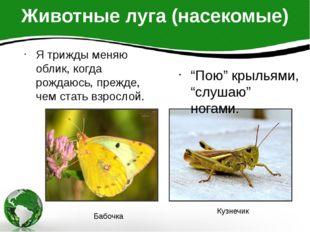 """Животные луга (насекомые) """"Пою"""" крыльями, """"слушаю"""" ногами. Я трижды меняю обл"""