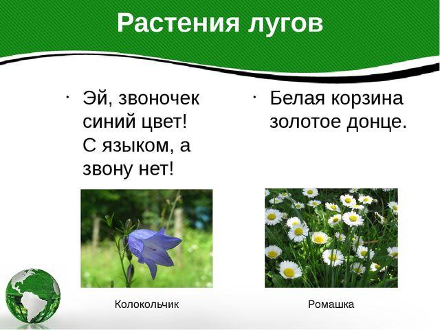 Растения лугов Эй, звоночек синий цвет! С языком, а звону нет! Белая корзина...