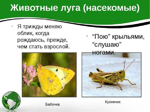 """Животные луга (насекомые) """"Пою"""" крыльями, """"слушаю"""" ногами. Я трижды меняю обл..."""
