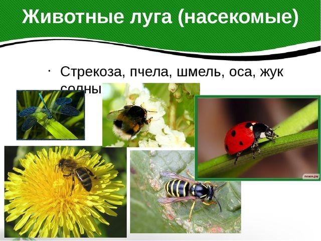 Животные луга (насекомые) Стрекоза, пчела, шмель, оса, жук солнышко