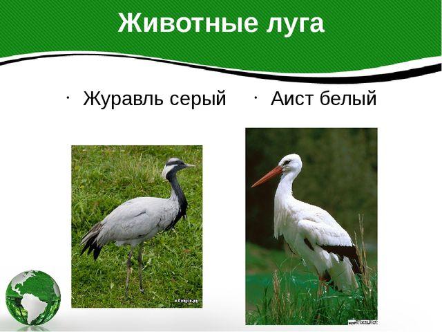 Животные луга Журавль серый Аист белый