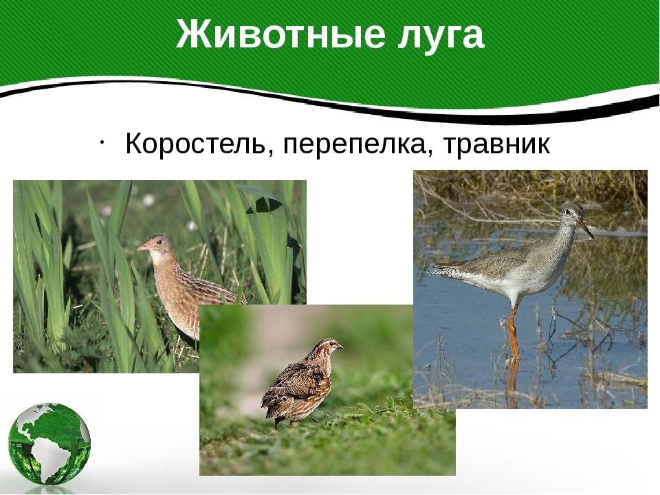 Животные луга Коростель, перепелка, травник