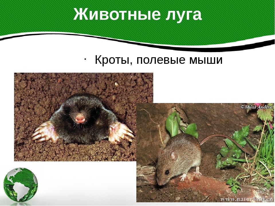 Животные луга Кроты, полевые мыши