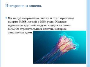 Интересно и опасно. Яд медуз смертельно опасен и стал причиной смерти 5,568 л