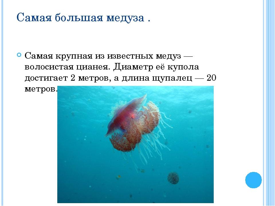Самая большая медуза . Самая крупная из известных медуз — волосистая цианея....