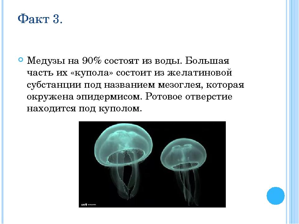 Факт 3. Медузы на 90% состоят из воды. Большая часть их «купола» состоит из ж...