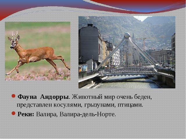 Фауна Андорры. Животный мир очень беден, представлен косулями, грызунами, пти...