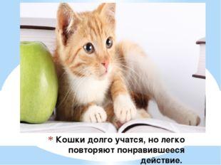 Кошки долго учатся, но легко повторяют понравившееся действие.