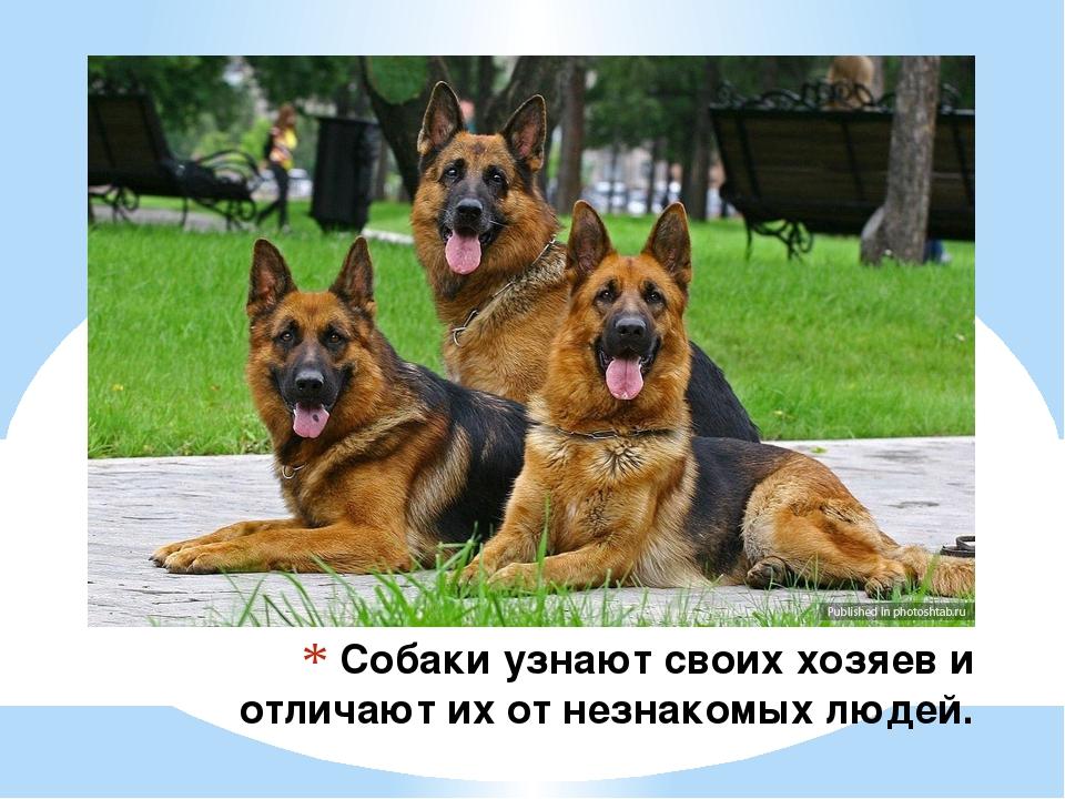 Собаки узнают своих хозяев и отличают их от незнакомых людей.