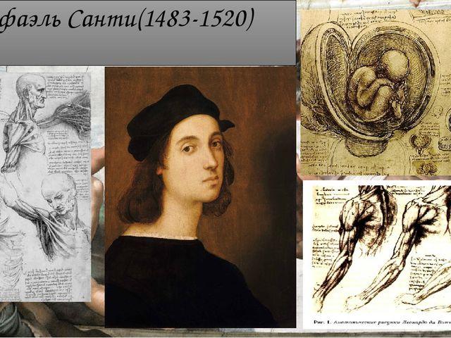 Рафаэль Санти(1483-1520)