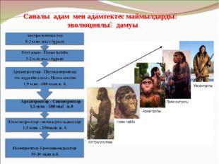 Саналы адам мен адамтектес маймылдардың эволюциялық дамуы Архантроптар - Сина