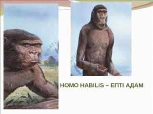 HOMO HABILIS – ЕПТІ АДАМ