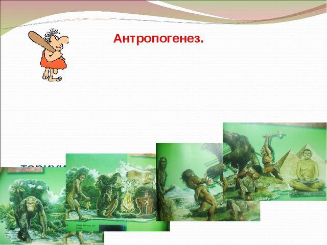 - тарихи даму кезеңдері - биологиялық факторлары - әлеуметтік факторлары Ант...
