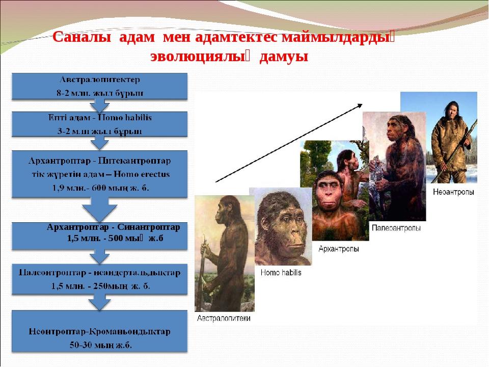 Саналы адам мен адамтектес маймылдардың эволюциялық дамуы Архантроптар - Сина...