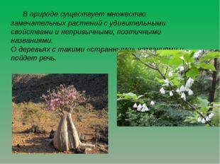 В природе существует множество замечательных растений с удивительными свойст