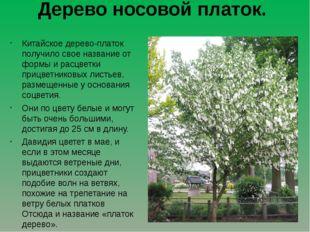 Дерево носовой платок. Китайское дерево-платок получило свое название от форм