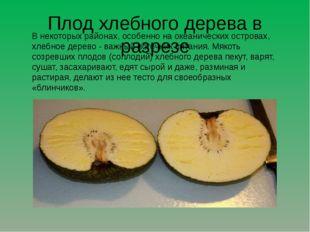 Плод хлебного дерева в разрезе В некоторых районах, особенно на океанических