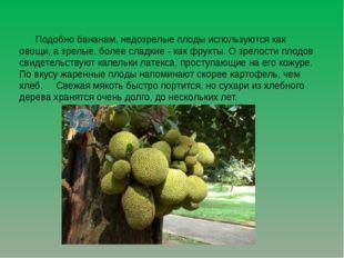 Подобно бананам, недозрелые плоды используются как овощи, а зрелые, более сл
