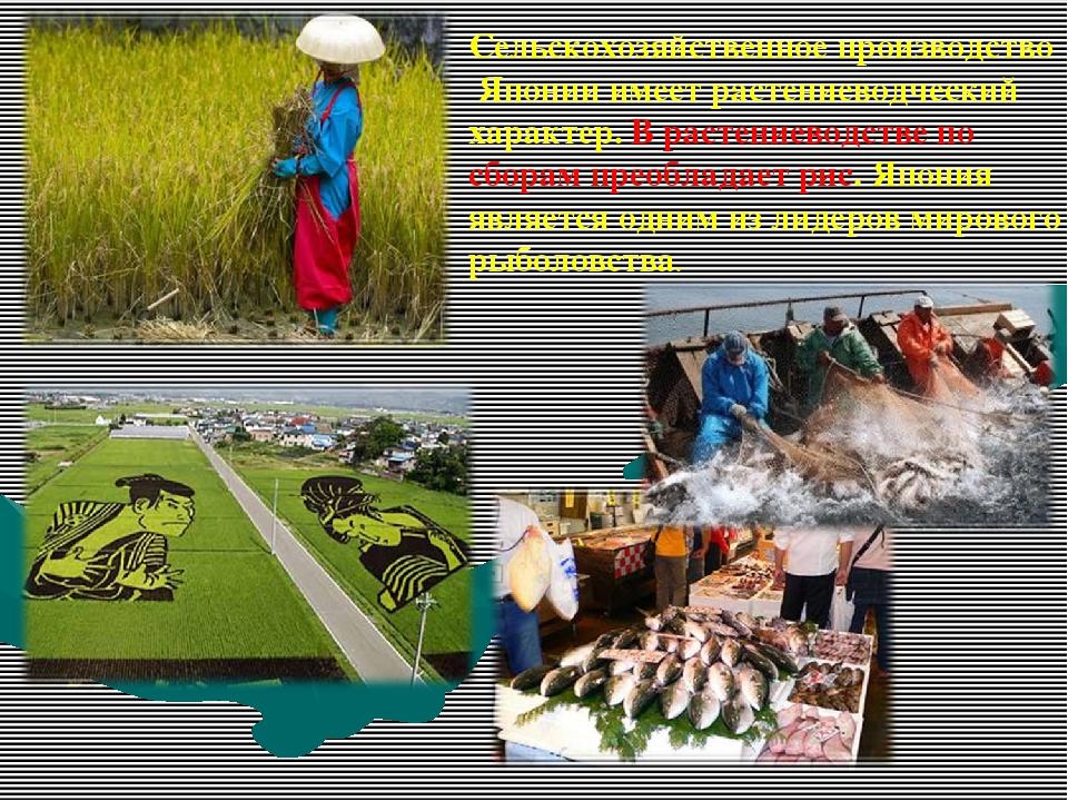Сельскохозяйственное производство Японии имеет растениеводческий характер. В...