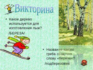 Какое дерево используется для изготовления лыж? /БЕРЕЗА/ Название какого гриб