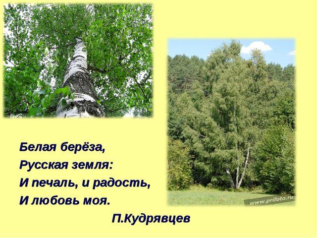 Белая берёза, Русская земля: И печаль, и радость, И любовь моя. П.Кудрявцев