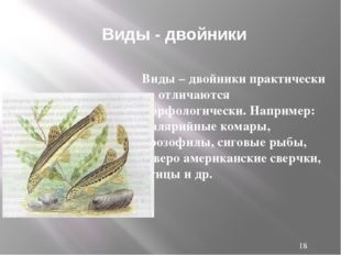 Виды – двойники практически не отличаются морфологически. Например: малярийн