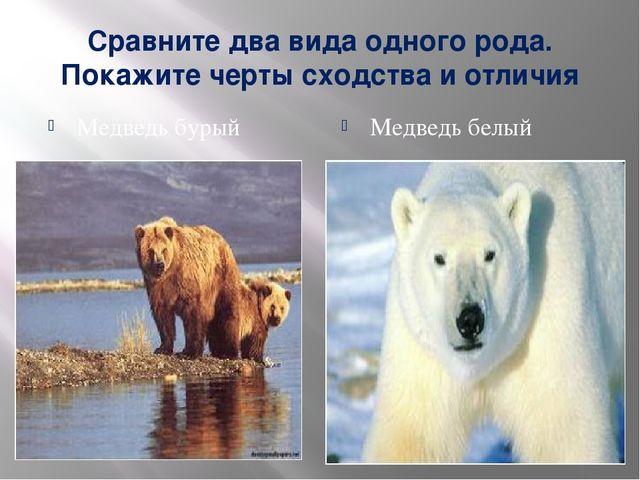 Сравните два вида одного рода. Покажите черты сходства и отличия Медведь буры...