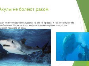 10.Акулы не болеют раком. А таком может многие не слышали, но это не правда.
