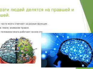 7.Мозги людей делятся на правшей и левшей. Обе части мозга отвечают за разные