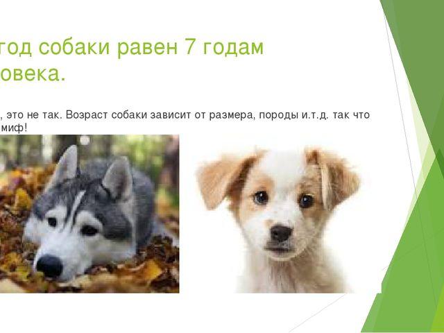 1.1 год собаки равен 7 годам человека. Нет, это не так. Возраст собаки зависи...