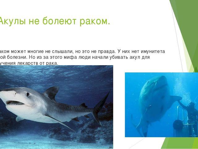 10.Акулы не болеют раком. А таком может многие не слышали, но это не правда....