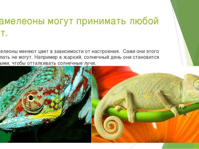 5.Хамелеоны могут принимать любой цвет. Хамелеоны меняют цвет в зависимости о...