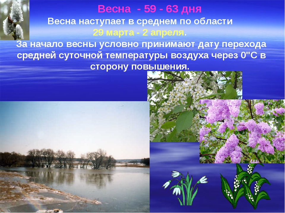 Весна - 59 - 63 дня Весна наступает в среднем по области 29 марта - 2 апре...