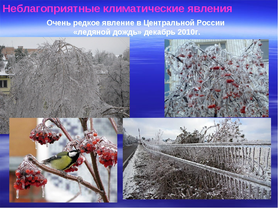 Неблагоприятные климатические явления Очень редкое явление в Центральной Росс...